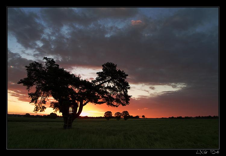 Baum1_SunriseDrama.jpg