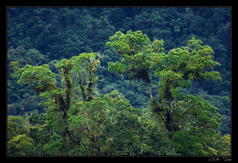 CRA_Rainforesttrees.jpg