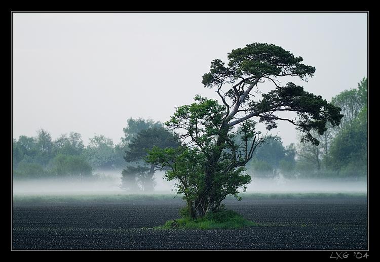 Lieblingsbaum2_1.jpg
