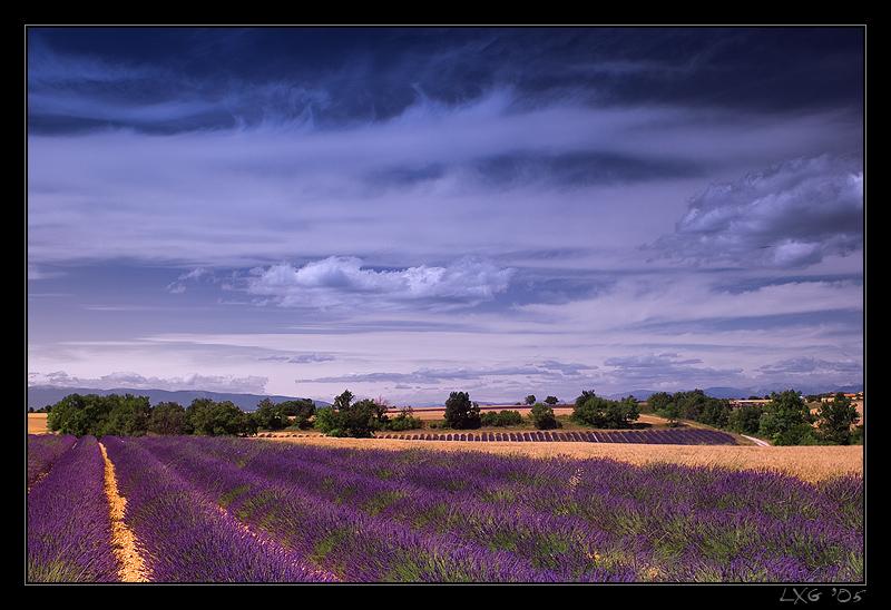 Provence_LavNicWid1.jpg