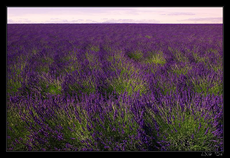 Provence_Lav_HorizFull.jpg