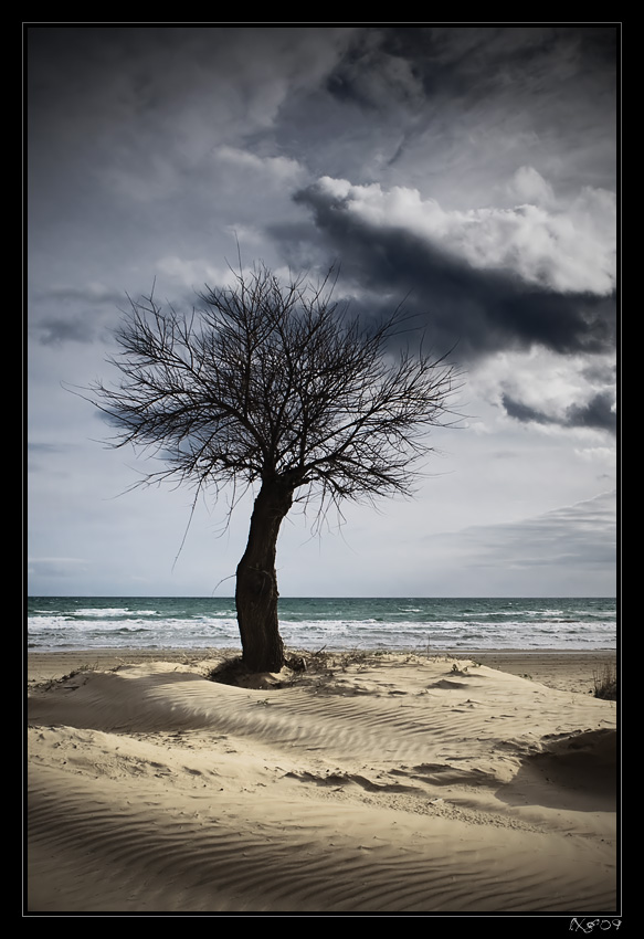 SicilyBeachtree.jpg