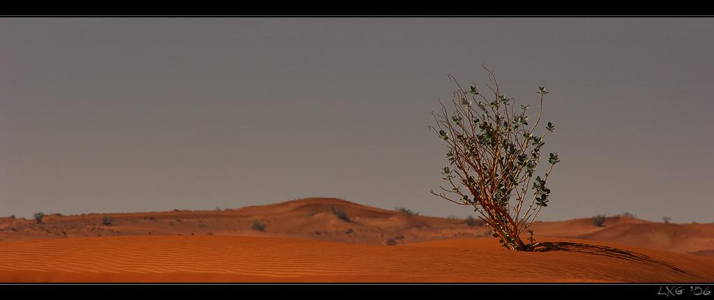 UAE_DesertBush.jpg