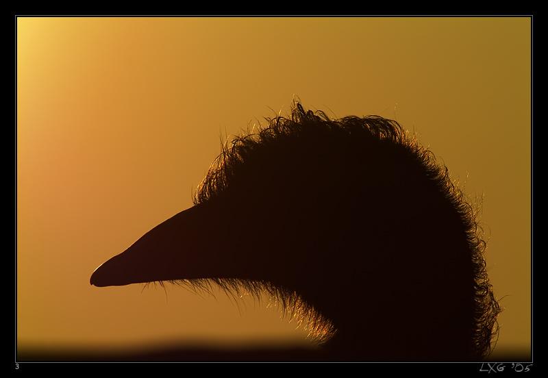 Emu_FrauSilhouette.jpg