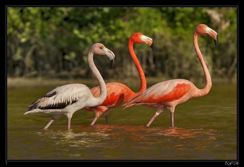 MEX_Flamingos1.jpg