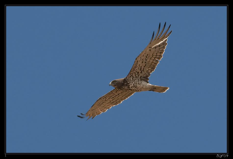 PRV_Schlangenadler1.jpg