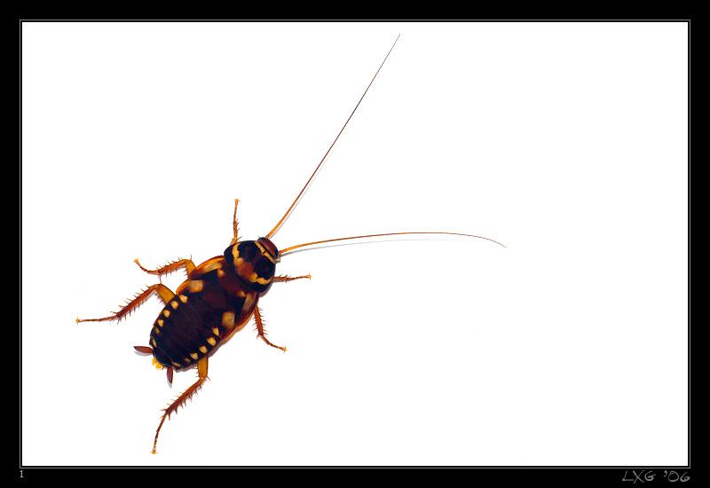 CRA_Cockroach1b.jpg