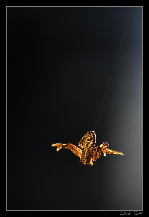 Krabbenspinne_Attackflug.jpg