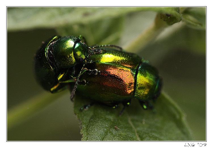 Makro_BeetlePopClose.jpg
