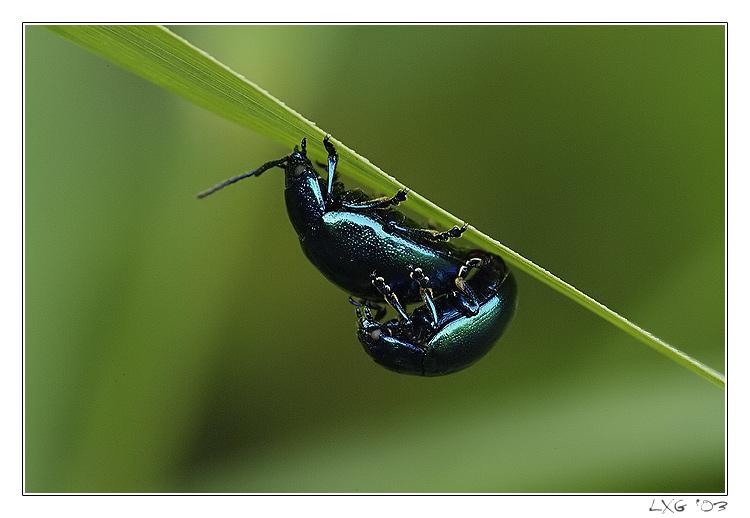 Makro_BeetlePopClose2.jpg