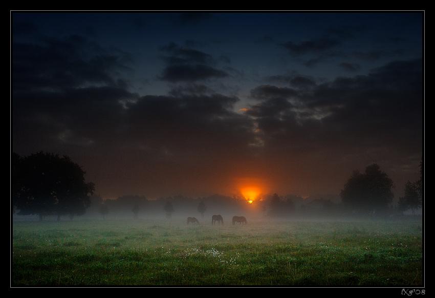 3horses_Sunrise.jpg