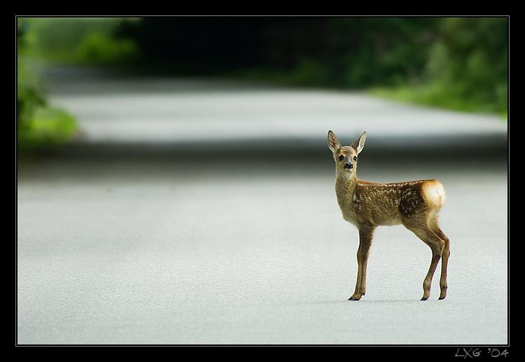 Bambi_Strasse.jpg