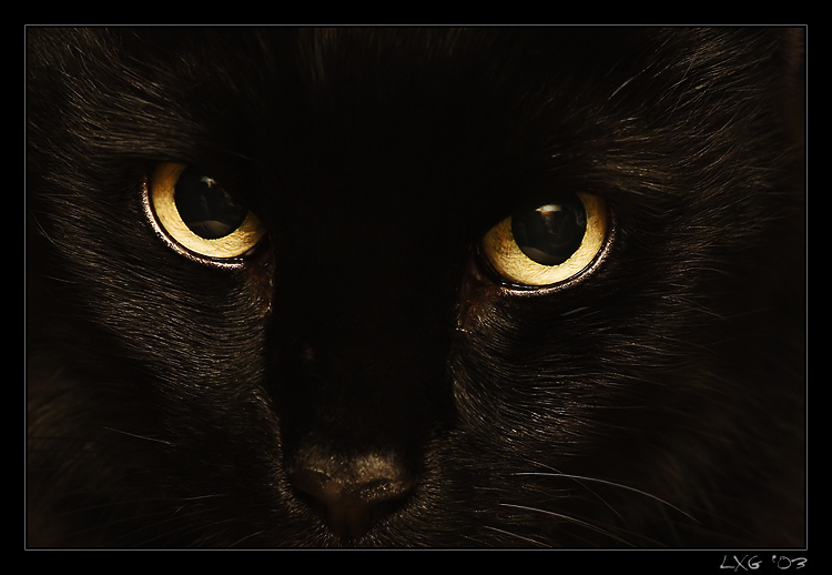 BlackCat_EyesClose.jpg