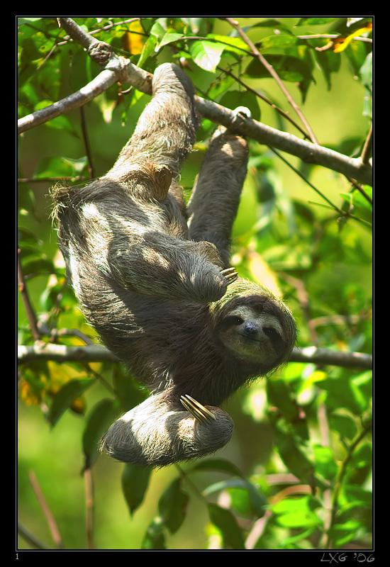 CRA_Sloth1.jpg