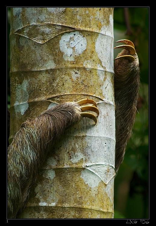 CRA_Sloth_Arms.jpg