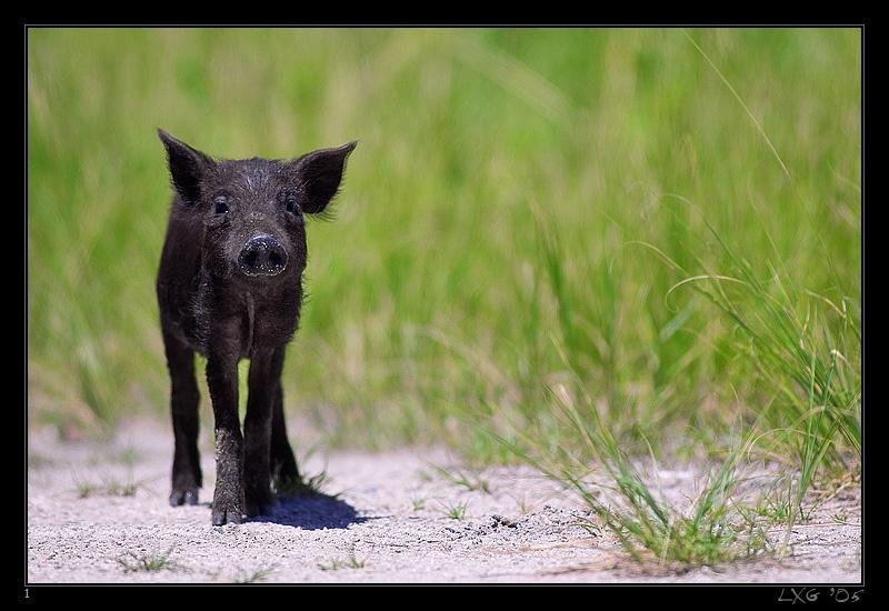 FLA_Wildschweinchen.jpg
