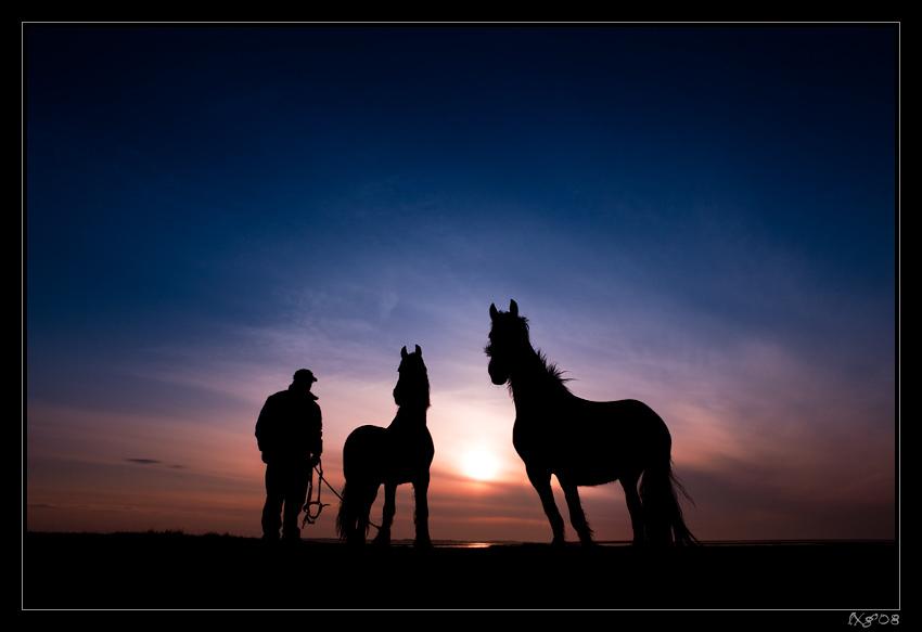 Friesenpferde_Sunrise.jpg
