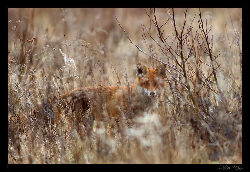 Fuchs_hidden.jpg