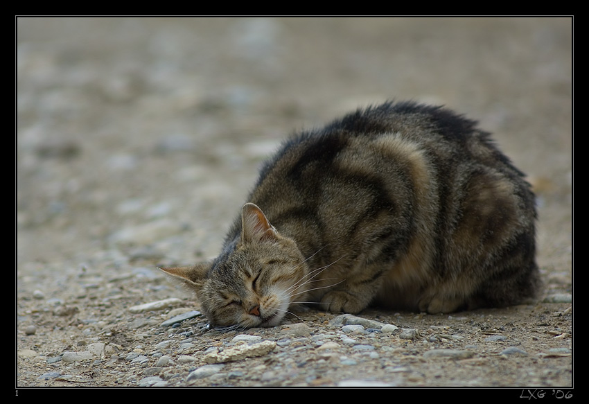 Katze_Bodenschmus.jpg