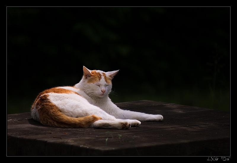 Katze_Gartenchill.jpg