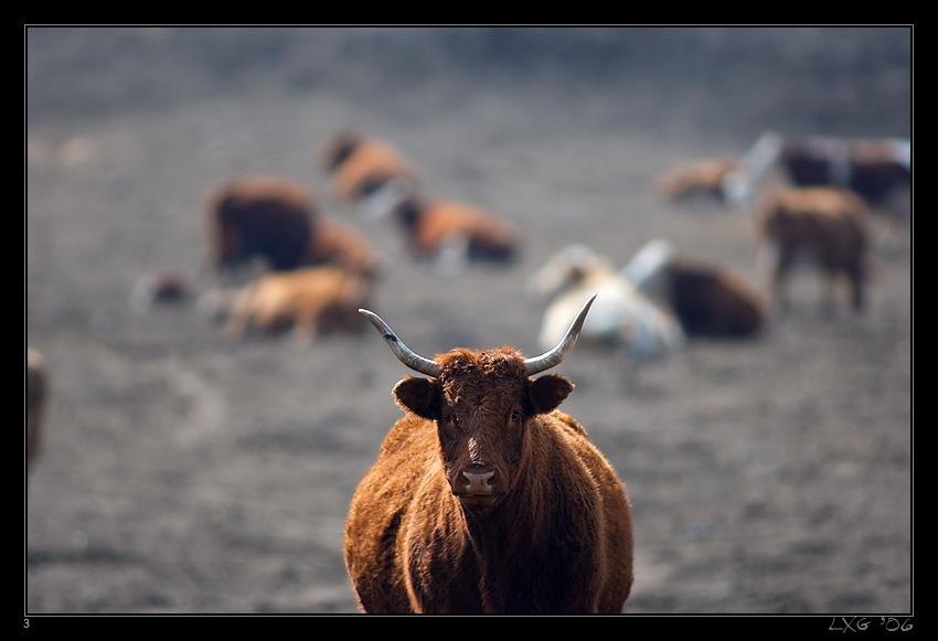 Longhorn_McP1.jpg