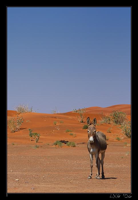 UAE_Wildesel.jpg