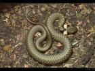 Reptiles & Amphibia